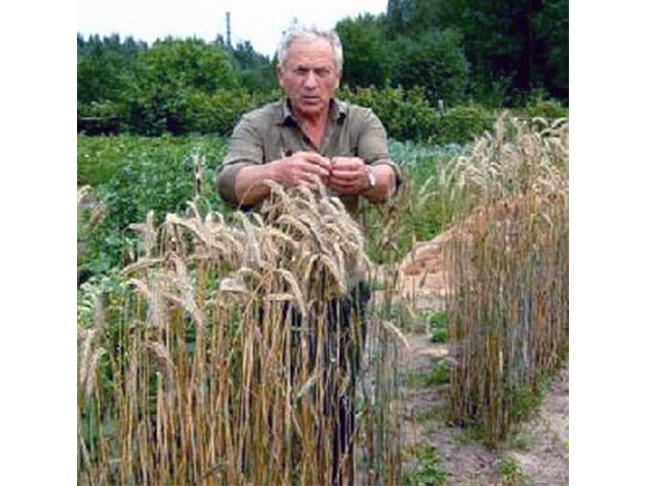 ЕМ-технологии: практические результаты в экологически чистом земледелии
