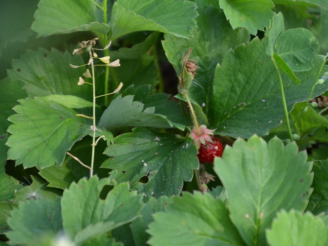 Плюсы и плюсы органического сельского хозяйства
