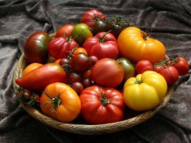 Получаем свои семена помидоров