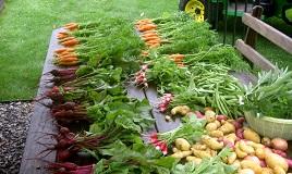 Как заинтересовать беларусских фермеров перейти на органическое земледелие