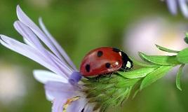 Защита от насекомых и профилактика