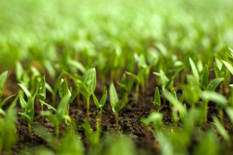 Открыта регистрация на IV Международную конференцию по развитию органического с/х!