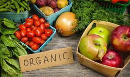 Проект закона об органическом земледелии парламент обсудит осенью