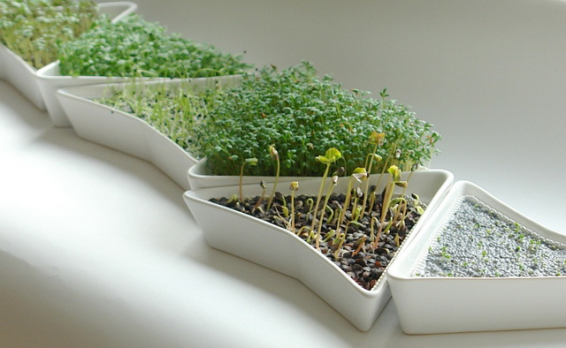 Три простых способа вырастить зелень зимой