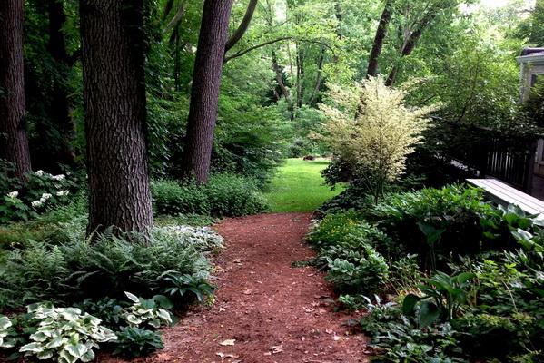 Лесной сад: что это, как это и, главное, зачем?