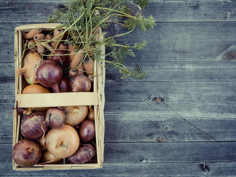 Шаги к устойчивости: как вырастить урожай в городе?