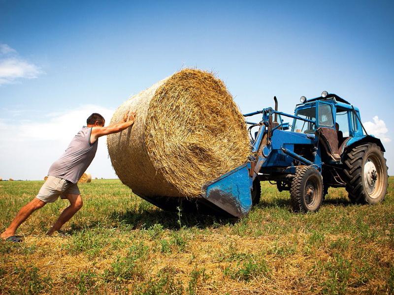 Решит ли принятие закона об органической продукции проблемы белорусских экофермеров?