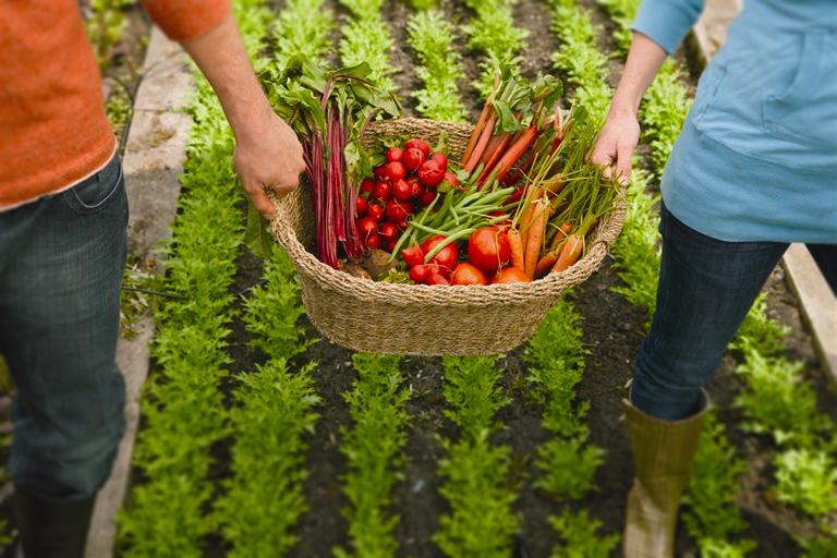 Еда в законе: как отличить натуральный продукт от псевдо-органики