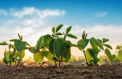 Кыргызстан объявил о 10-летнем плане перехода на 100% органическое сельское хозяйство