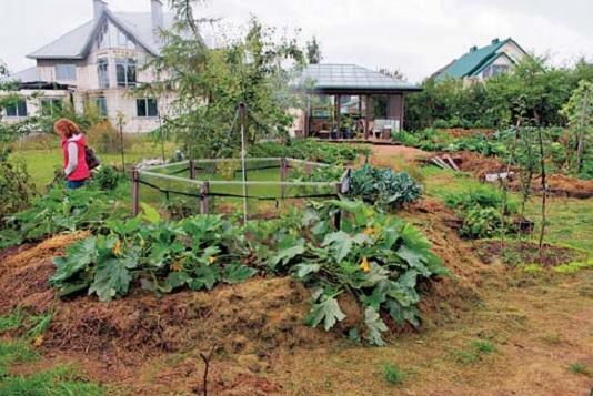 Практика больших урожаев на приусадебном участке