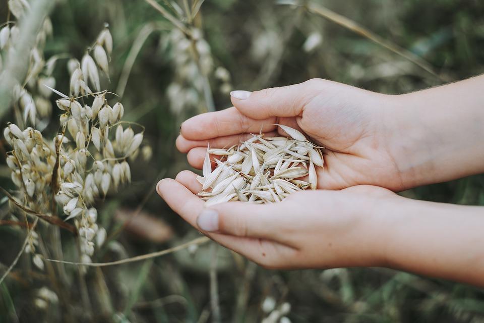 Шанс для желающих развивать органическое сельское хозяйство: образовательная поездка в Польшу