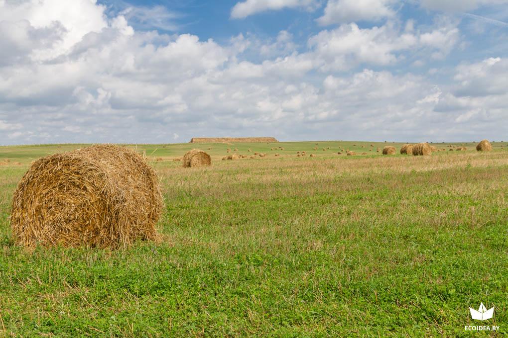 В Беларуси выбрали самого экологически дружественного фермера