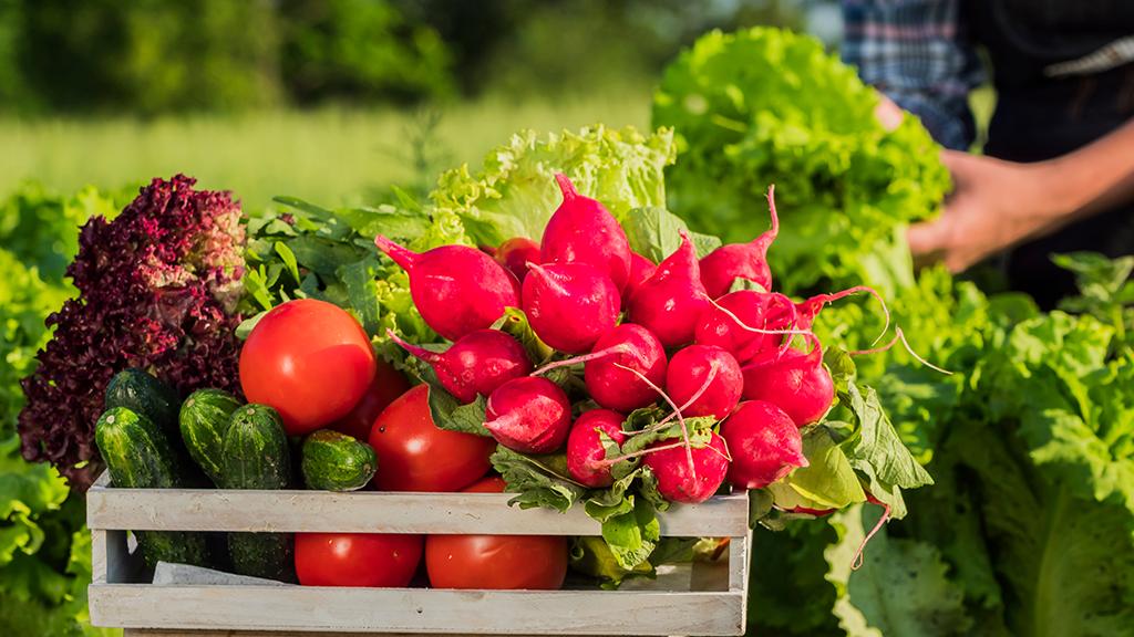 Как заработать, выращивая экологические продукты?