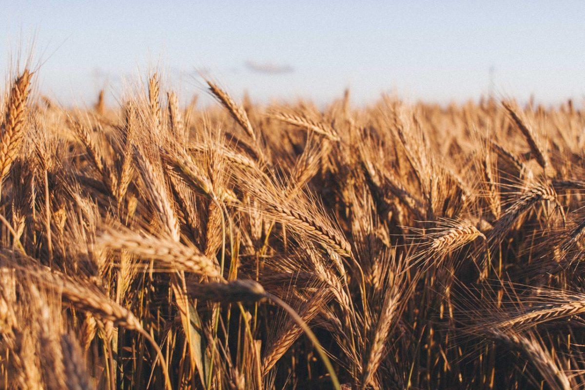 3 декабря в Минске состоится 7-ая международная конференция по органическому сельскому хозяйству
