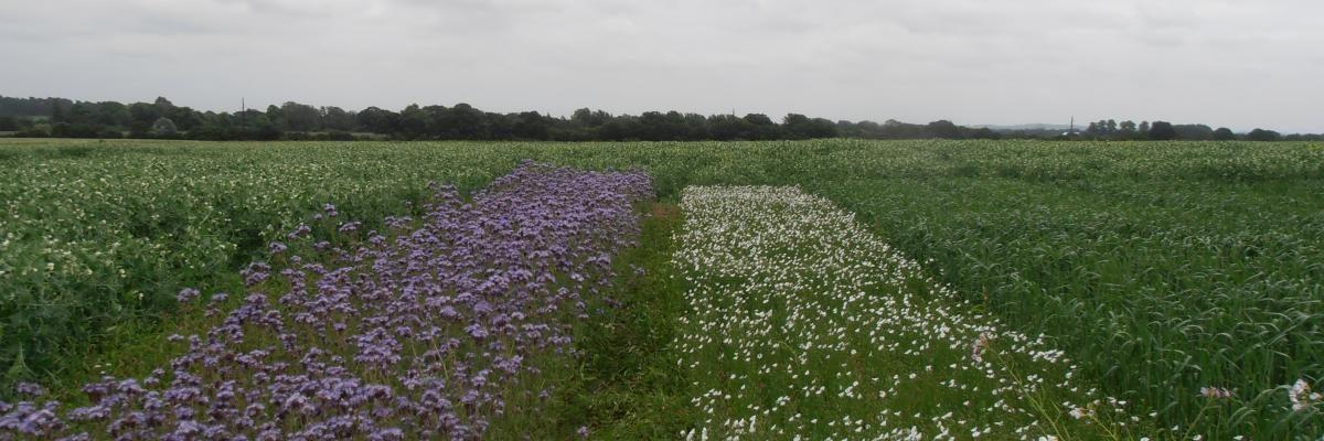 Дружественное природе сельское хозяйство увеличивает урожайность: свидетельство экологической интенсификации