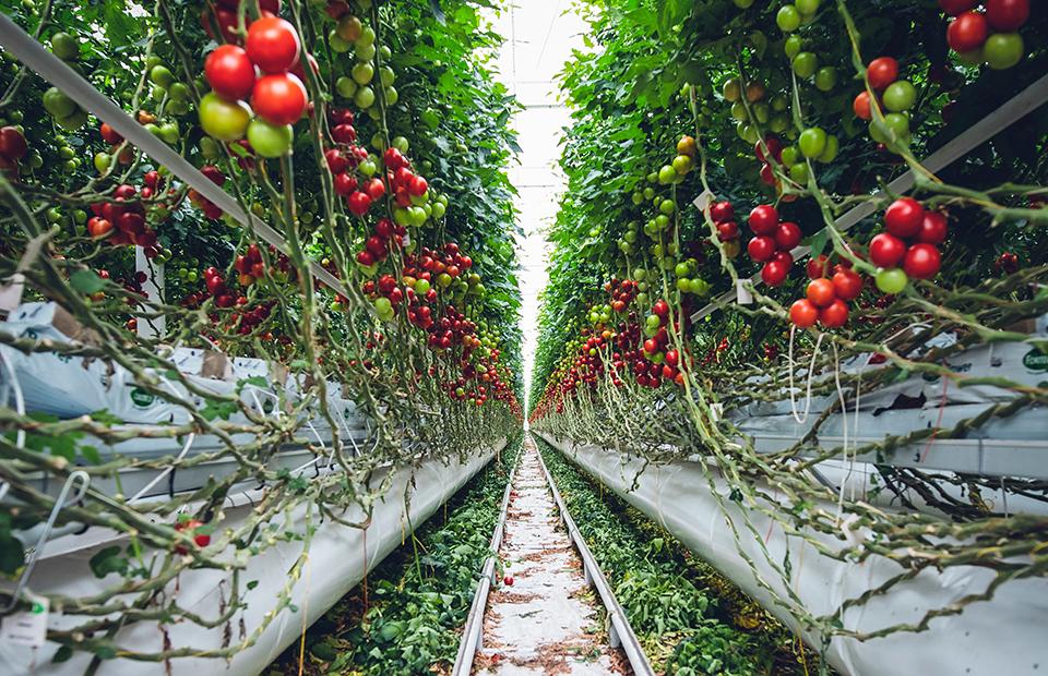 Еда и климат: что есть в условиях глобального потепления
