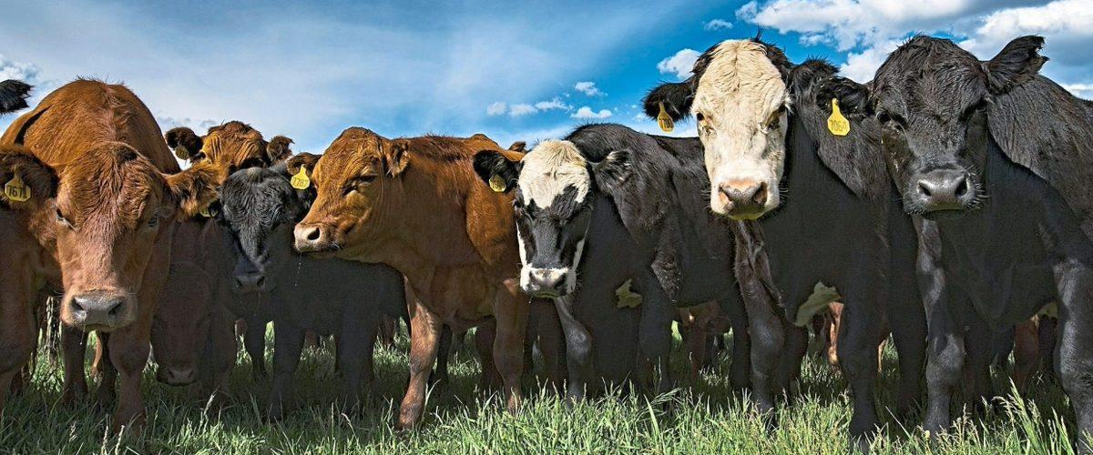 К 2050 сельское хозяйство можно сделать углеродно-отрицательным