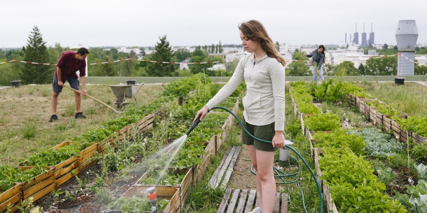 Why green roofs are a must-have for modern cities
