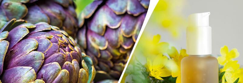 BIOFACH — ведущая мировая выставка органических продуктов питания