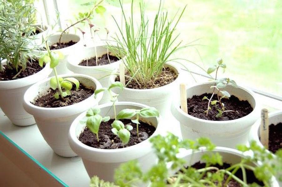Как защитить комнатный огород? С помощью микроорганизмов