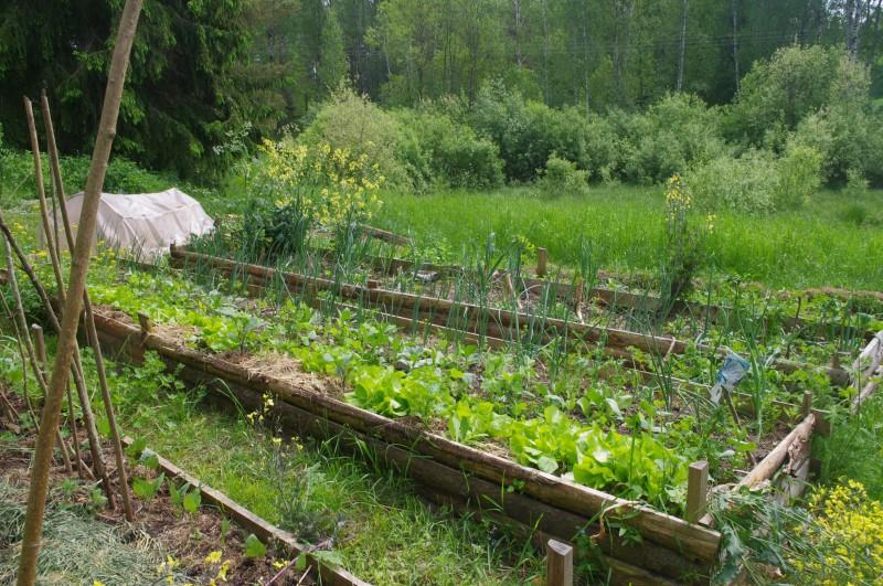 Как создать пермакультурный огород с минимумом усилий
