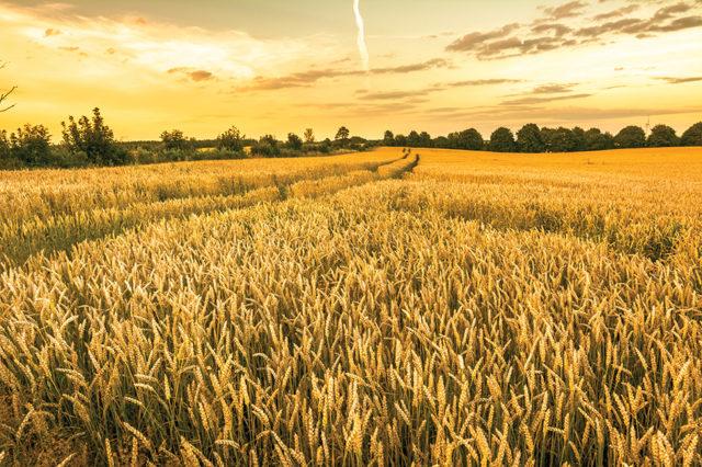 Международная конференция по органическому сельскому хозяйству Беларуси состоится 30 марта