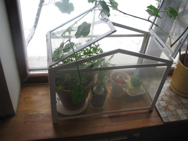 Для обеспечения необходимой влажности растения можно поместить в домашний минипарничок