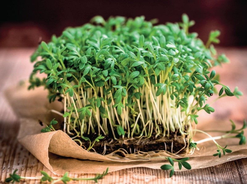 Микрозелень в домашнем огороде