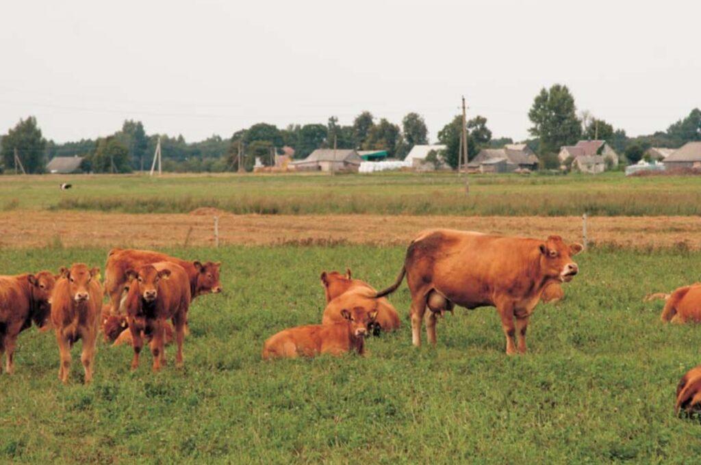 Основные принципы органического животноводства и особенности содержания отдельных видов животных
