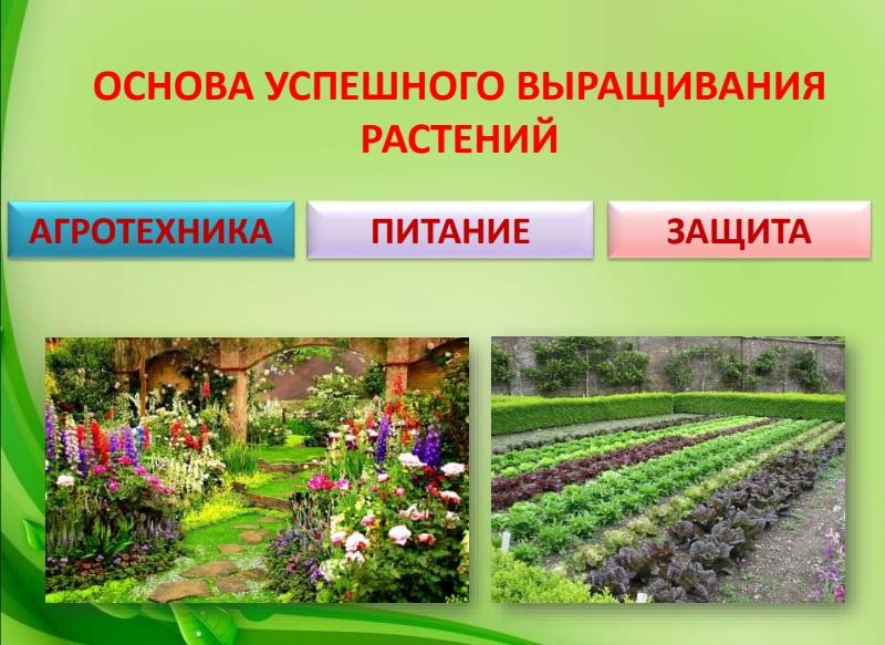 Презентация «Как защищать растения от болезней и вредителей биологическими методами»
