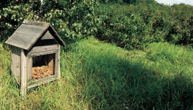 Домик для полезных насекомых на ягодной плантации. Фото: Светлана Семенас